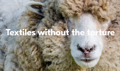 Our wool.